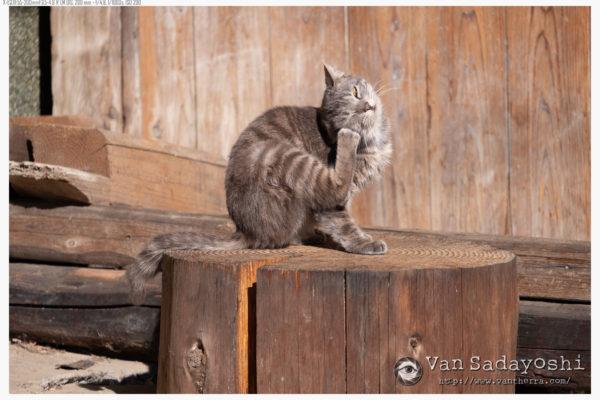 猫と廃墟と勉強会日程