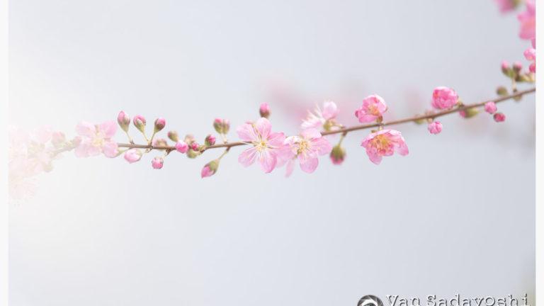 課題「花がかわいい」の私なりの解釈