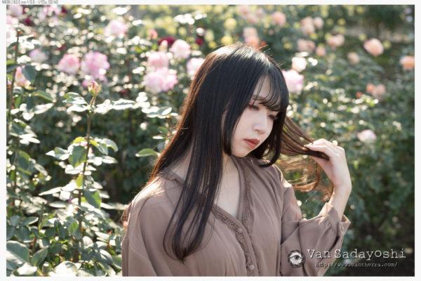 薔薇ほぴちゃんカメラ内訳
