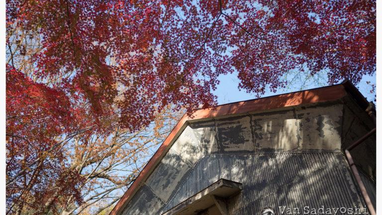 裏側から撮る紅葉