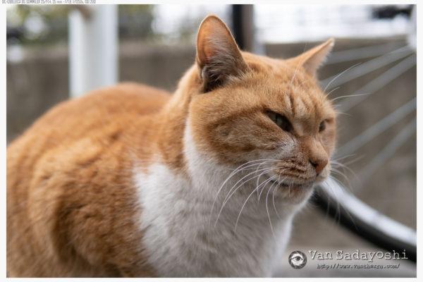 猫バンザイ
